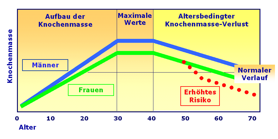 Knochenmasse BMD (bone mineral density)
